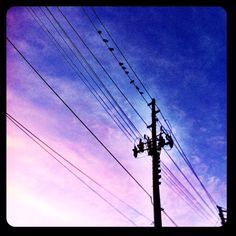 Day 6 - From a low angle - Birds on a Wire...