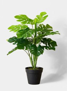 split leaf philodendron fake plants retail store display