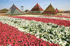 Dubai Miracle Garden, a desert wonder | GulfNews.com