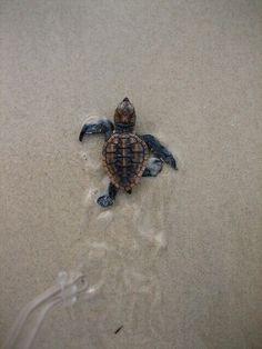 ; | sweet little turtle