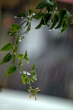 Photo Rain .. by Vikas Tripathi on 500px