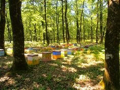 Foloi forest, Helia, Greece