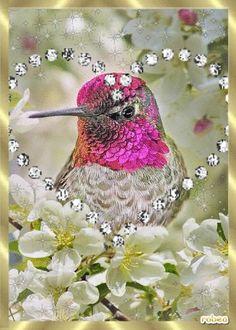 Resultado de imagen de FLOWER ANIMATED GLITTER PINTEREST Tuesday Pictures, Hummingbird Flowers, Bird Gif, Good Night Messages, Flock Of Birds, Gif Photo, Water Reflections, Gif Pictures, Gifs