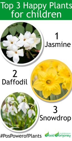 Got children? Here's the top 3 plants to grow that make them feel happy
