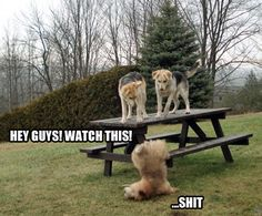 Funny Animal Pictures - View our collection of cute and funny pet videos and pics. New funny animal pictures and videos submitted daily. Funny Dog Fails, Funny Dogs, Cute Dogs, Love My Dog, Really Funny, Funny Cute, The Funny, Crazy Funny, Super Funny