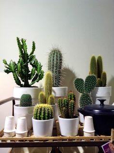 Succulent Terrarium, Cacti And Succulents, Cactus Plants, Indoor Plants Clean Air, Indoor Plant Pots, Cactus Pictures, Garden Wall Art, Cactus Decor, Cactus Flower