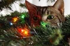 15 Cats Conspiring Against Christmas - 3MillionDogs