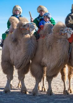 Mongolian family on camels, Gobi Desert.