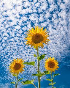 Aprenda com as flores. Mesmo com toda a sua fragilidade e expostas a todo tipo…