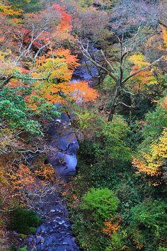 Fall #aso #kumamoto #japan.                              ALL my Grandparents came to Hawaii from Kumamoto!