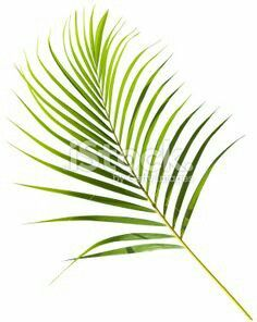 Stock palm frond tattoo