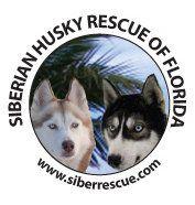 See our Florida rescue on Facebook: https://www.facebook.com/HuskyMomAtSiberianHuskyRescueOfFlorida