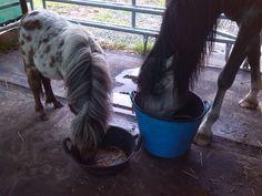 Gaipo en Rufie samen eten in de tent