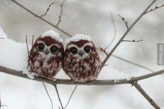 İki Mutlu Yavru Baykuş  - 4finite.com