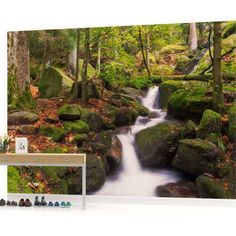 forest wall mural wallpaper - Google Search