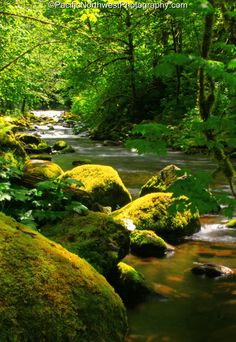 Pacific Northwest Landscape Photography | Standing along Tanner Creek on a beautiful Spring morning