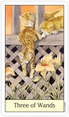 Three of Wands card from the Cat's Eye Tarot Deck Three Of Wands, Divine Tarot, Cat S, Cat Background, Oracle Tarot, Tarot Card Meanings, Sacred Art, Tarot Decks, Archetypes
