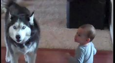 This looks and sounds like our husky Sarah Belle