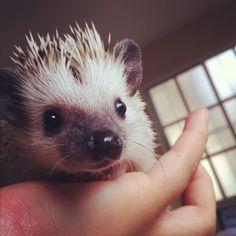I live to see animals like hedgehogs