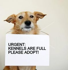 Please...... there are so many animals waiting for good homes. Don't buy from a breeder, rescue!!