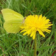 Goedemorgen allemaal! Fijne dinsdag #flower #inspiration #butterfly #naturephotography #natureart by esthervanderham