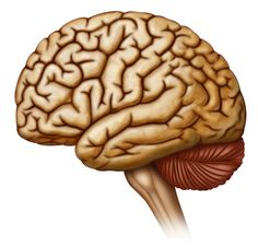 """""""Strong Link Found Between Dementia, Common Anticholinergic Drugs"""" -- """"There is a strong and possibly irreversible link between Alzheimer's disease and many commonly used medications for insomnia, allergies, and depression..."""" Check the article at the click-through  for some scary facts and find the meds list here: http://www.agingbraincare.org/uploads/products/ACB_scale_-_legal_size.pdf"""