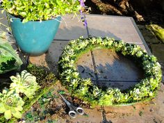 Succulent wreath ~ using plants from the garden
