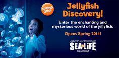 Enjoy the new Jellyfish Discovery Exhibit at SEA LIFE Aquarium at the LEGOLAND Resort - opening Spring 2014!