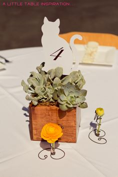 Succulent + kitten card centerpieces