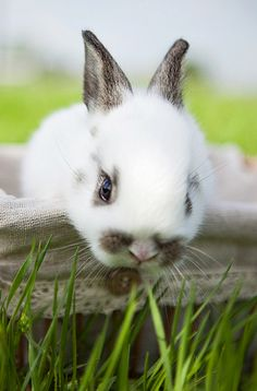 ♔ sweet bunny  [previously pinned by Mary Horn to a more generic board, Miscellaneous Marvelous Mammals. Thanks, Mary!]