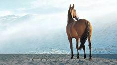 Le chanceux perd sa femme, le malchanceux perd son cheval.