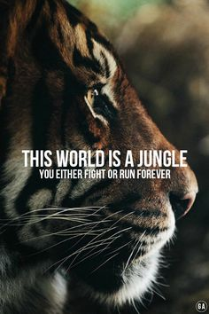 It's a jungle out there; how we live in it is our choice.