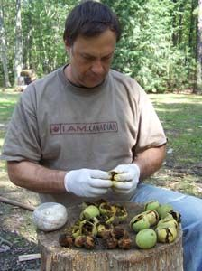 Practical Primitive | Skill of the Month: Making Black Walnut Dye