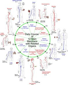 Daily Course of 12 Meridians with Related Organs.