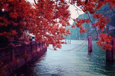 beautiful, japan, nature, not mine, photography, place, grunge?
