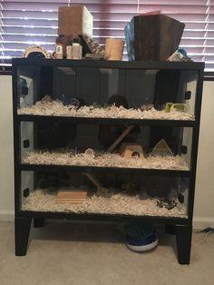Resultado de imagem para hamster móvel