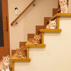 """More of the """"crazy cat lady starter kit""""!"""