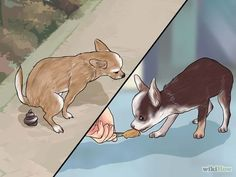 Potty Dog Training: Image titled Potty Train a Chihuahua Step 1 Puppy Potty Training Tips, Training Your Dog, Training School, Chihuahua Love, Long Hair Chihuahua, Teacup Chihuahua Puppies, Dog Behavior, New Puppy, Little Dogs