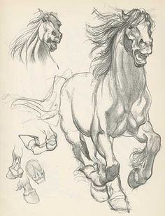 Willy Pogany || CHARACTER DESIGN REFERENCES | Find more at www.facebook.com/... Draft horse art