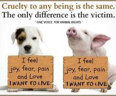 cruelty is not victimless, go #vegan