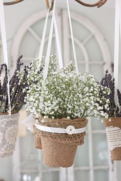 baby's breath in peat pot by french larkspur