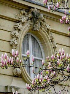 Shabby Chic via Carolyn              Beautiful magnolia seen through the window