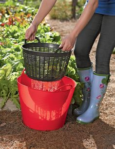Rinse veggies right in the garden and then re-use the water on the plants. Plastic bucket and small laundry basket/colander from Dollar Tree would do nicely.....
