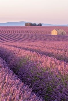 Discover the 51 most beautiful places in the world. and abroad, there's no shortage of striking places to see in this lifetime. Lascaux, Nature Photography, Travel Photography, Street Photography, Landscape Photography, Valensole, Images Esthétiques, Nature Aesthetic, Lavender Aesthetic