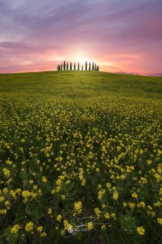 "A crown of flowers - An amazing sunrise in Val d'orcia , tuscany , italy  If you like my works leave a like and contact me for lesson of Photoshop , Prints and Ws on-field And if you like this location and you would like do a WS contact me  don't forget to follow me <a href=""https://www.facebook.com/gianlucapodestaphoto/"">Gianluca Podestà Fine Art Photo</a> <a href=""https://www.instagram.com/gianlucapodesta/"">Instagram</a>"