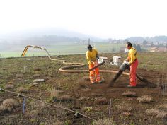 Green roofs for ground-nesting plovers, Berne, Switzerland. Project workers add compost substrate (about 4 cm) to the topsoil of the roof at Shoppyland, Berne. (Photo by N. Baumann)