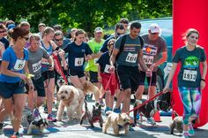 And........there off to the races that is! Dogs and their parents participating in the local Lawrence KS Paw Valley 5K. I think the Labradoodle will come in first!  #brownfootbearphotography  #brownfootbear #photography #gunnarwilliamsphotography #gunnwilliams #gunnwilliams #dog #dogs #dogsofinstagram #dogoftheday #woof #mustlovedogs #withdog #love #fitness #LawrenceKS #lfk #KansasCity #kc #Kansas #ks #kansasphotos #summer