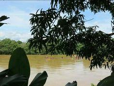 El #RioSinu es el único río en Colombia y uno de los pocos en el mundo que comprende algunos de los más importantes complejos bioecológicos: Páramo, estuario, selva tropical, humedales y es el que bordea las Haciendas Francia y Lusitania en Córdoba -Montería #GanaderiaSostenible #NotaEcológica
