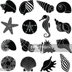 Conch Shell Vector Art And Graphics | Getty Images