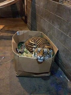 Clint: Katzenbilder - Animals and pets Cute Funny Animals, Cute Baby Animals, Animals And Pets, Cute Cats, Funny Cats, Funny Tiger, Funny Jokes, Funny Cat Pictures, Animal Pictures